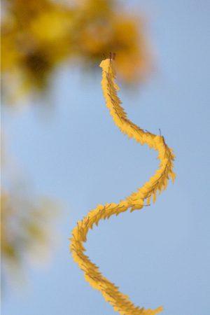 Falling_Leaves_